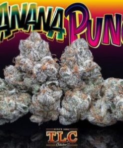 buy Jungle Boys Banana Punch online, jungle boys, jungle boys bags, Jungle Boys Banana Punch, Jungle Boys Banana Punch online, jungle boys carts, jungle boys dispensary, jungle boys extracts, jungle boys instagram, jungle boys packaging, jungle boys prices, jungle boys seeds, jungle boys seeds for sale, jungle boys strain, jungle boys strains, jungle boys wedding cake, jungle boys weed, jungle boys weed strain, the jungle boys