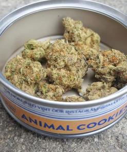animal cookies smart bud