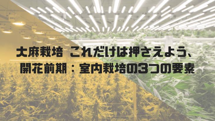 大麻の開花セオリー。開花前期:室内水耕栽培、3つの要素