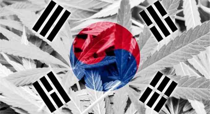 韓国大麻合法