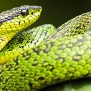 Could You Survive A Snake Bite Oupblog
