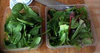 6.4.16 - Spinat Risotto,Salat,vegetarisch (5)