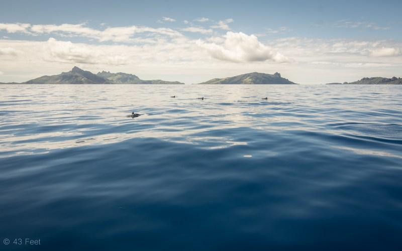 yasawa fiji dolphins, sv cavalo