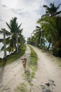 dog on wharf in rotuma fiji, sv cavalo