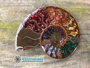 432oneness ammonite1