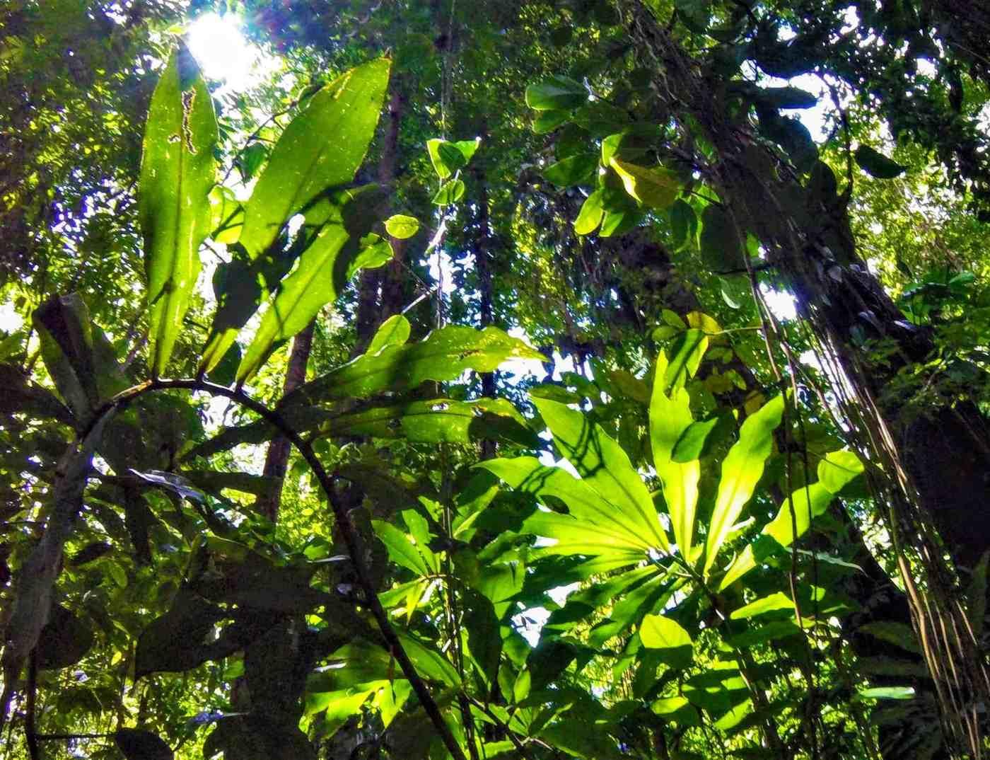 Uvita Jungle Coasta Rica