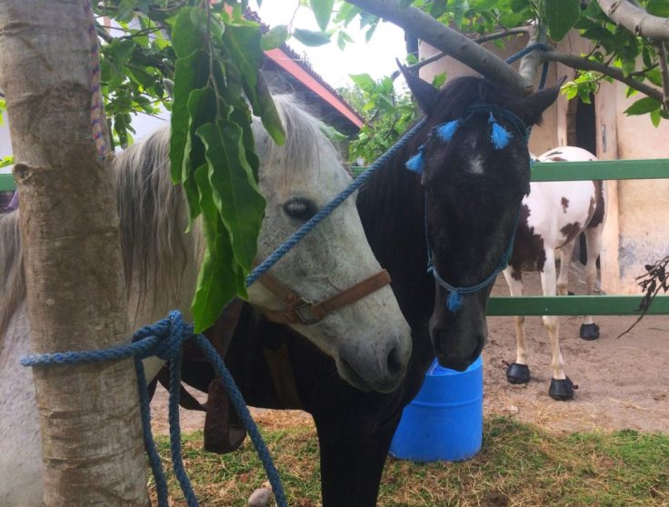 Horses at the Cabalgata