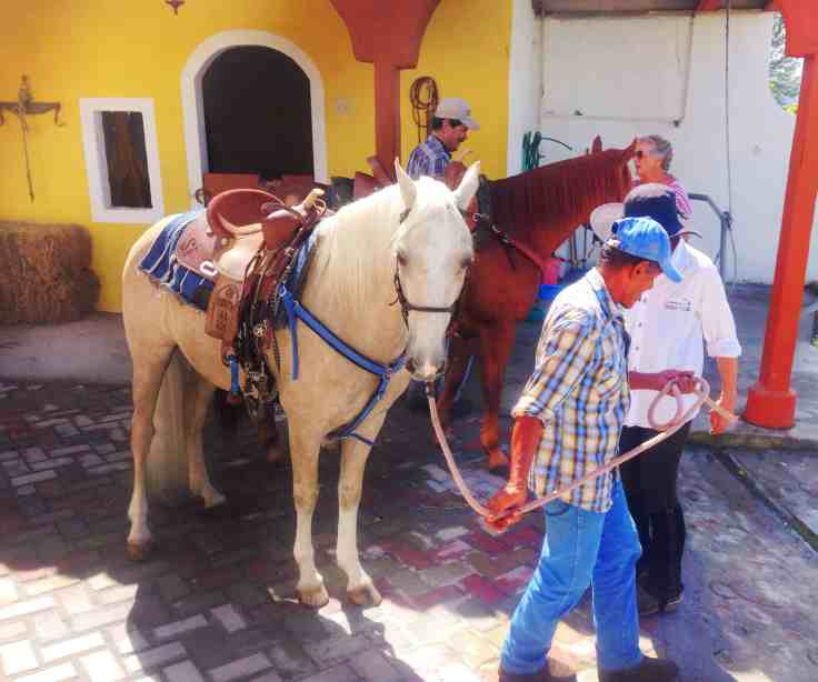 white horse at the Cabalgata