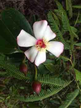 Flower in Arvi Park