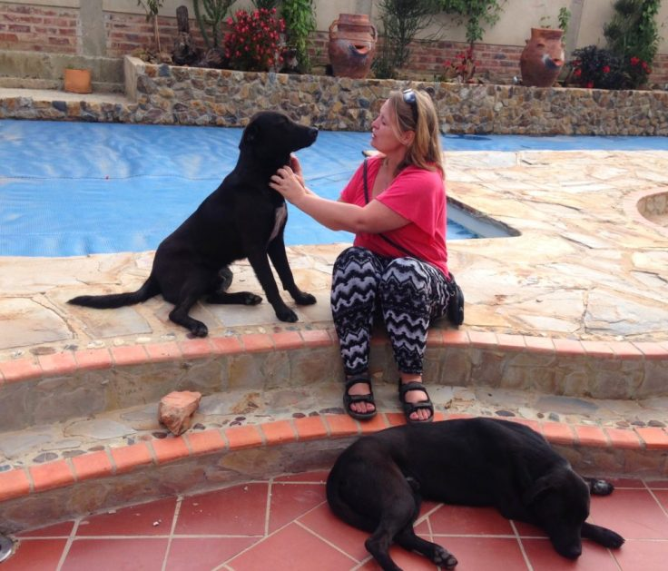 Two labs by the pool while House sitting in Villa de Leyva