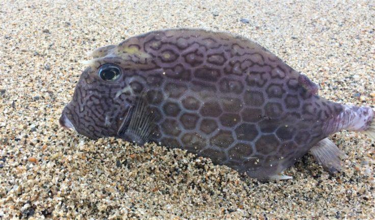 fish in Tayrona National Park north of Cartagena, Colombia