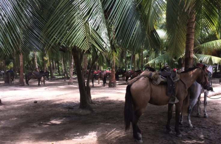 horses in Tayrona National Park north of Cartagena, Colombia