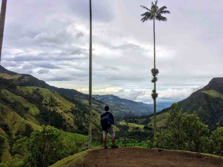 Cocora Valley,  with wax palm trees in beautiful Colombia