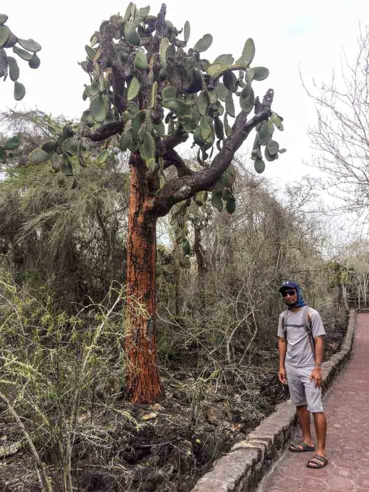 Giant Cacti Tree