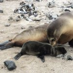 AWW-DORABLE SEA LIONS AND SHARKS IN GALAPAGOS