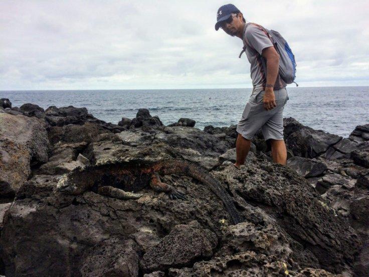 Marine Iguana on lava rocks