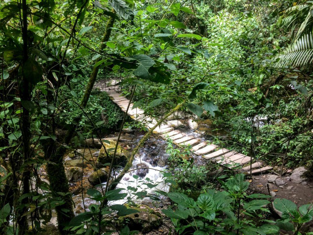Jungle in Colombia