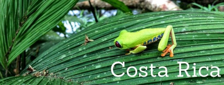 Tree frog on costa rica banner, Life outside the box