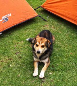 Andy the dog, our mascot on the Santa Cruz Trek