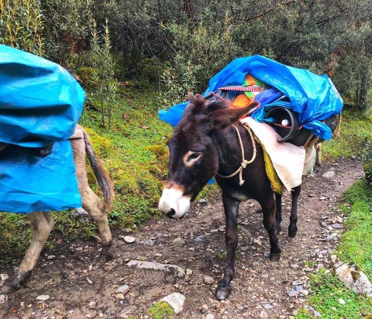 Pack Donkeys on the Santa Cruz Trek