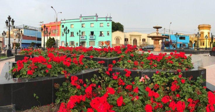 Flowers in Lima Peru