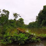 TORTUGUERO, A TOWN WITH NO CARS