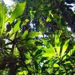 REFUGIO SOLTE: FINDING PARADISE
