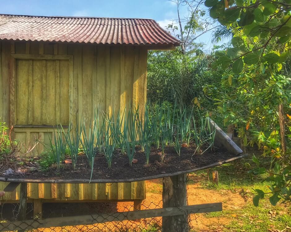 Elevated crops in front of a yellow house in a clearing in the Amazon Jungle