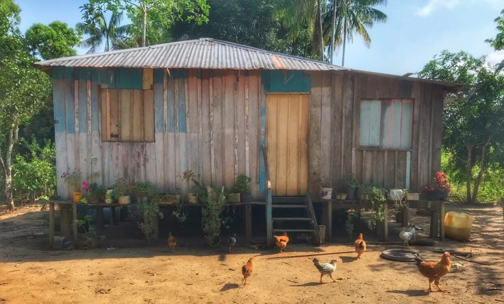 A small slated home on stilts with a flock of chickens. The home is in a small clearing in the Amazon Jungle