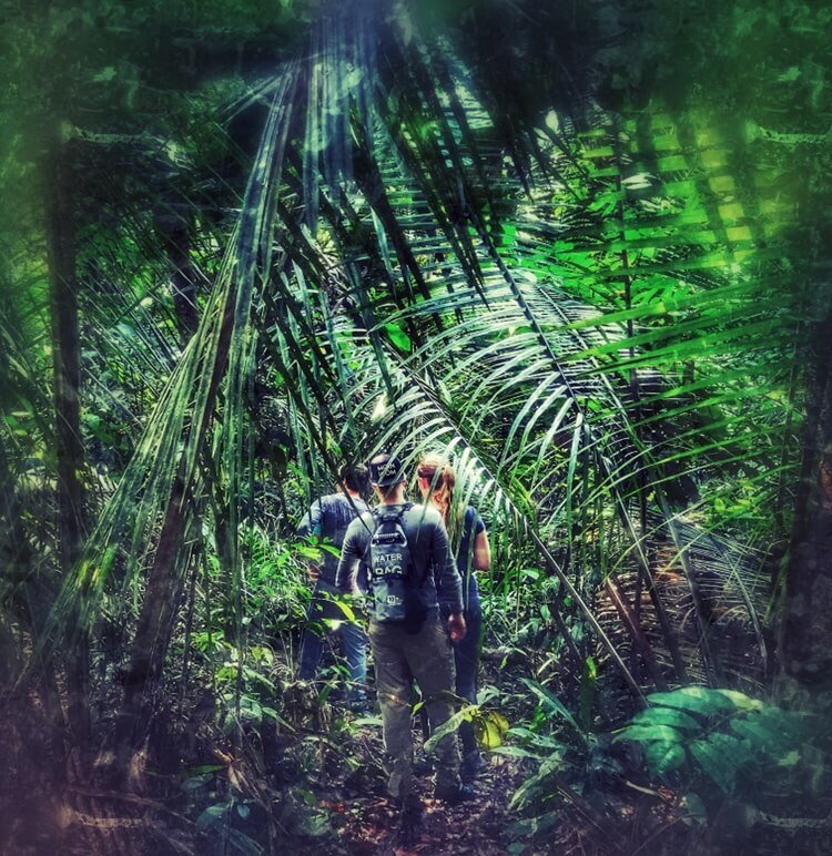 Walking through the Jungle