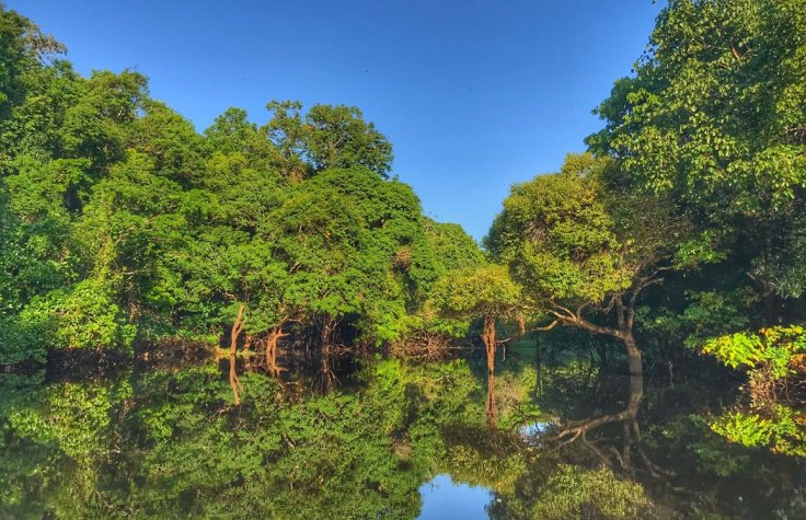Still water like a mirror on the Amazon Tours