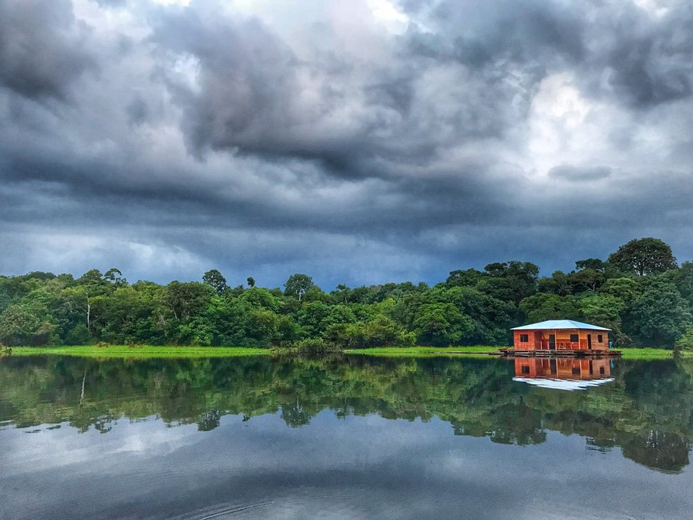 Approaching our Lodge for the Amazon Tours, none of the huts could be seen from the water.