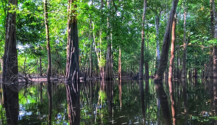 Trees in the water on the Amazon Tours