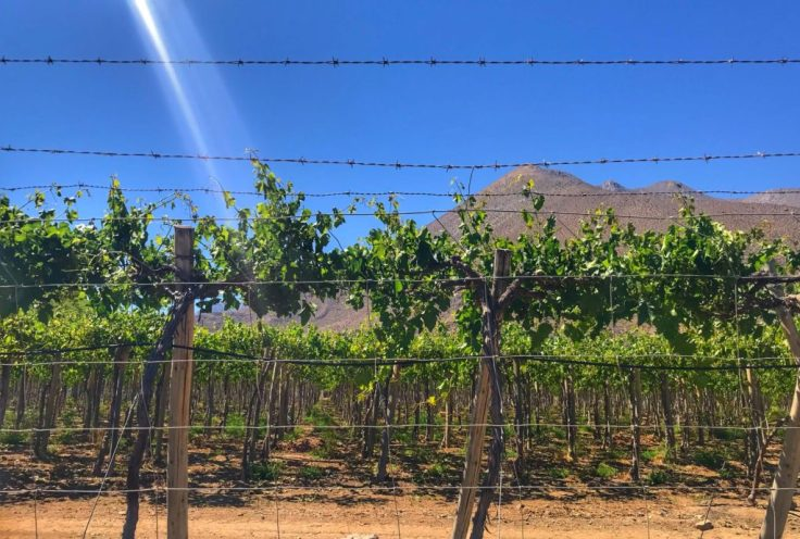 Elqui Valley vineyard near our campground