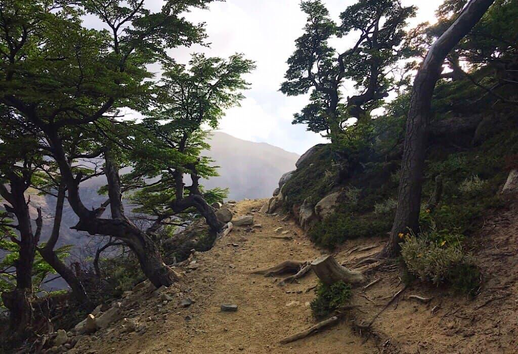 Tree line on the Torres del Paine W trek