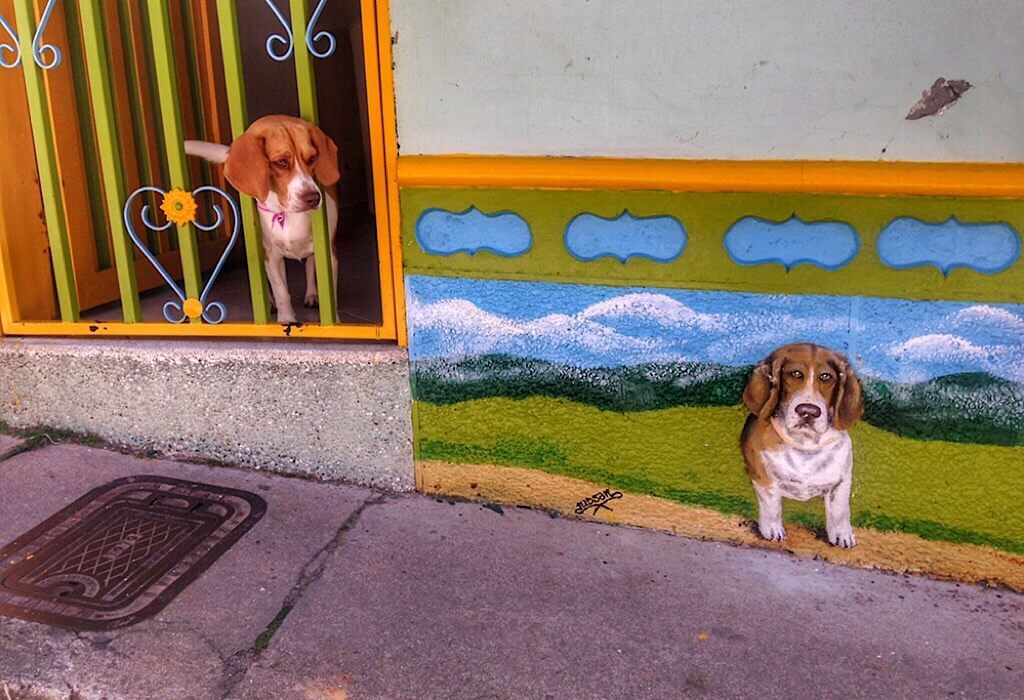 Zocalo in Guatape with a dog