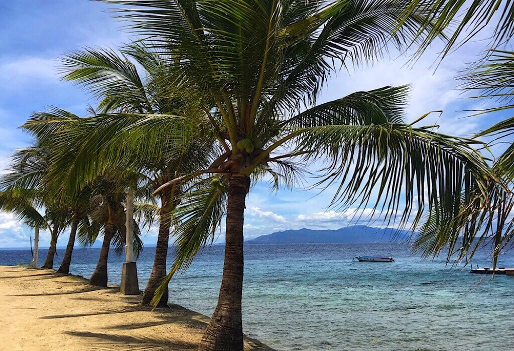 Palm trees on the beach in Puerto Galera