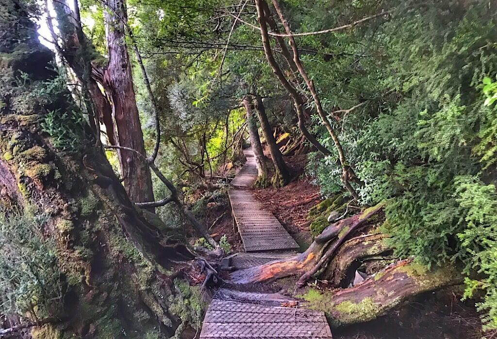 The boardwalk around Dove Lake