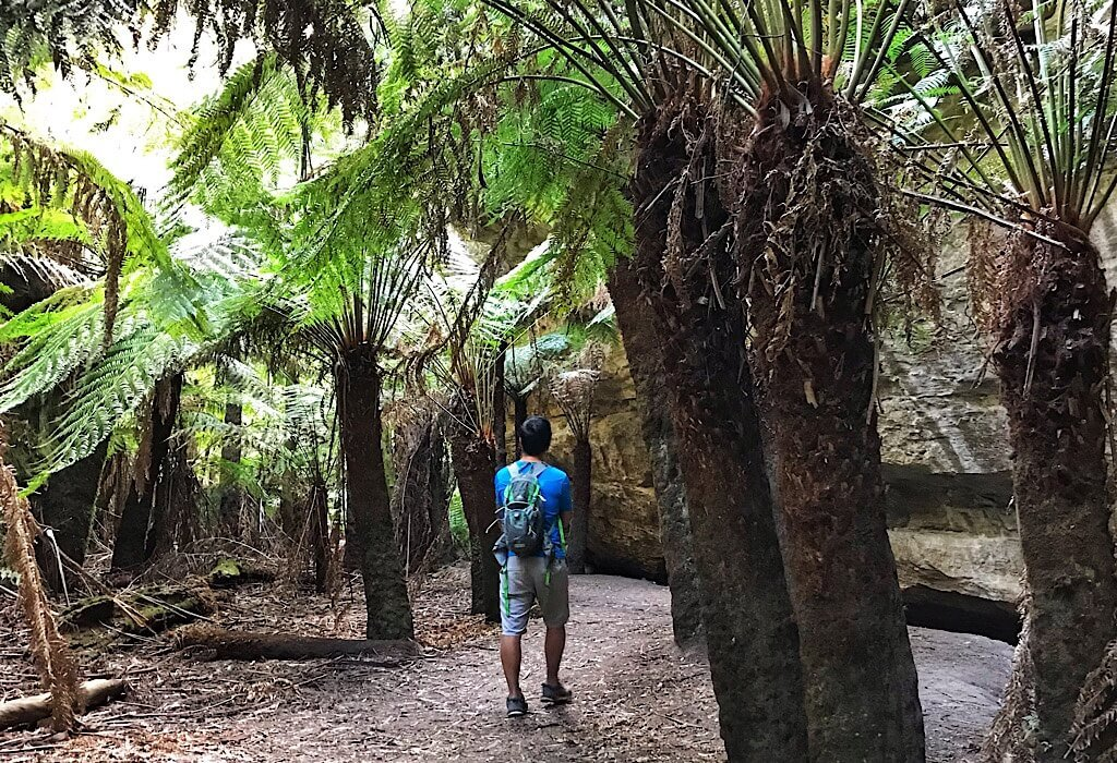 Trin walking among fern trees near the glow worm tunnel in the Sydney area