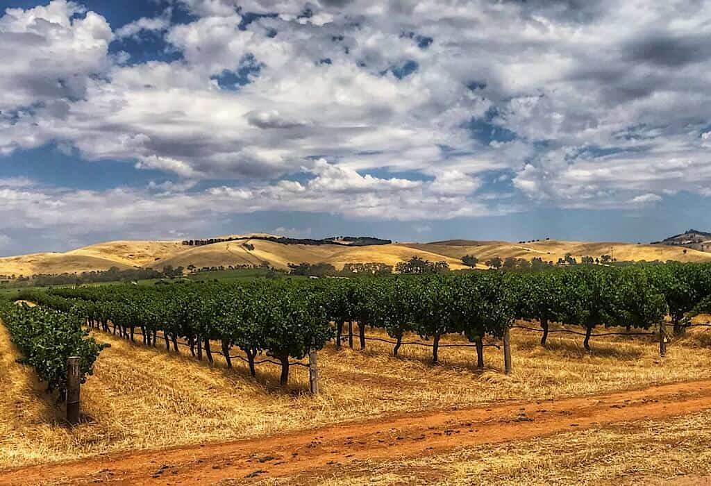 Vineyard in Barossa Valley