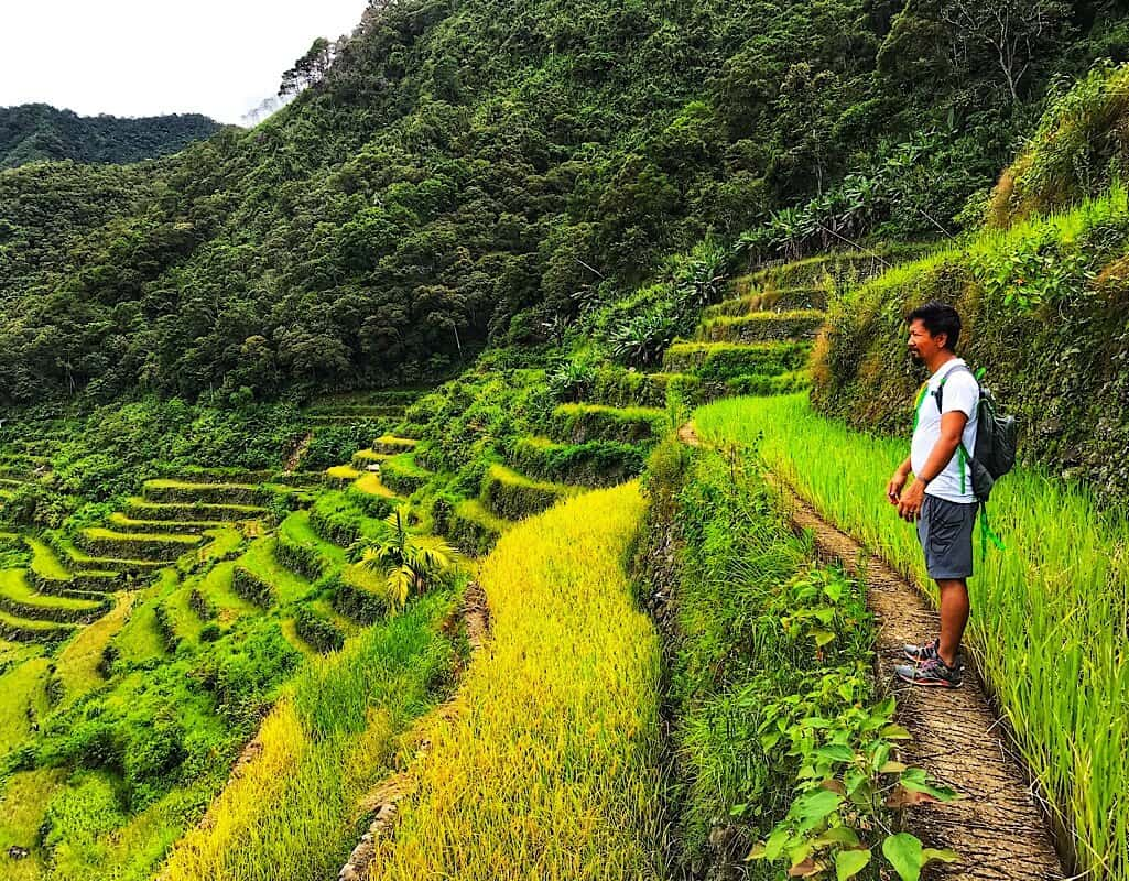 Rice paddies in the Ifugao region of the Philippines