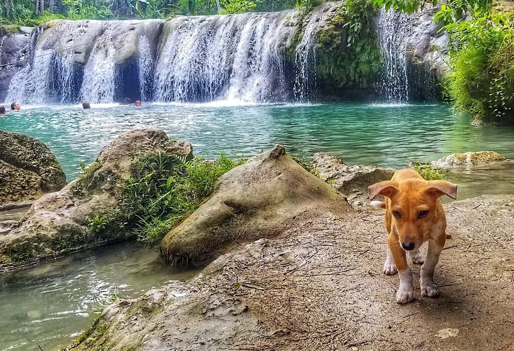 A small waterfall and swimming hole with a stray puppy that we hiked to while circling Siquijor