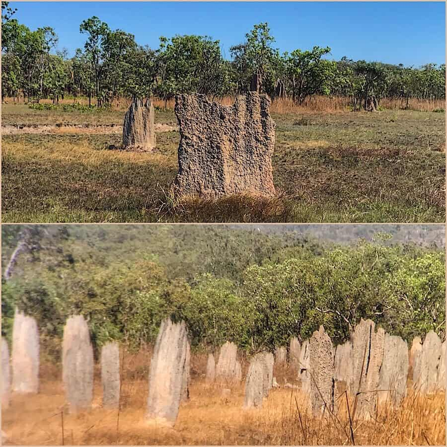 Magnetic Termite mounds, flat and similar in looks to ancient wooden headstones