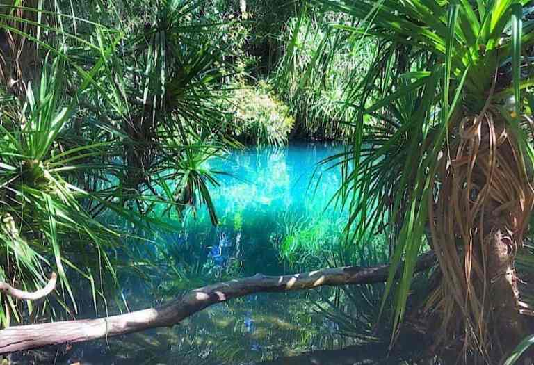The blue water at Berry Springs surrounded by lush vegitation