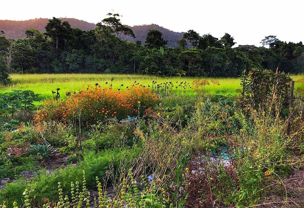 A garden of flowers and vegetables in Mission Beach