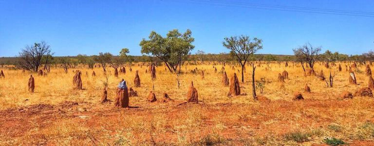 Termite mounds in the Northern Territory