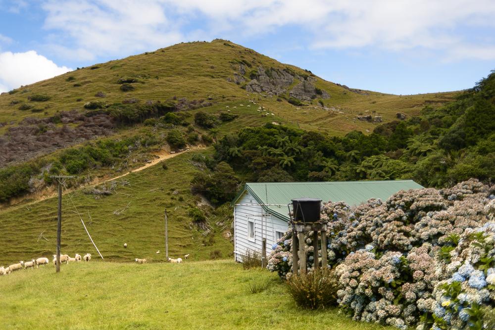New Zealand Travel D2 Naomi VanDoren-4