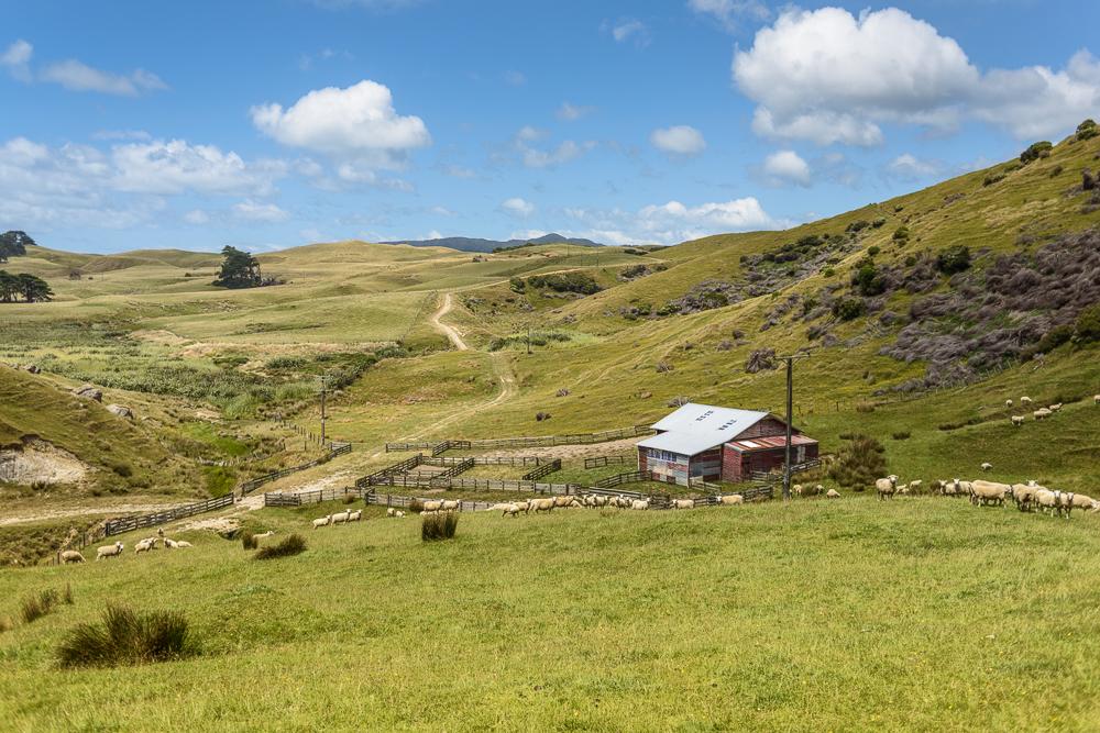 New Zealand Travel D2 Naomi VanDoren-6