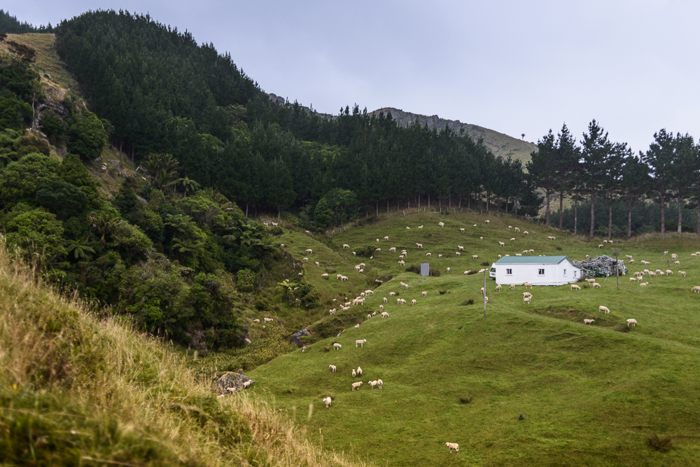 New Zealand Travel D2 Naomi VanDoren-8