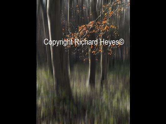 04_Autumn Woodland_Richard Heyes_(2nd)